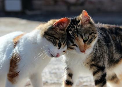 Cats-Together
