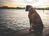 Dog-on-Dock1