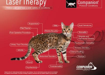 cat laser therapy