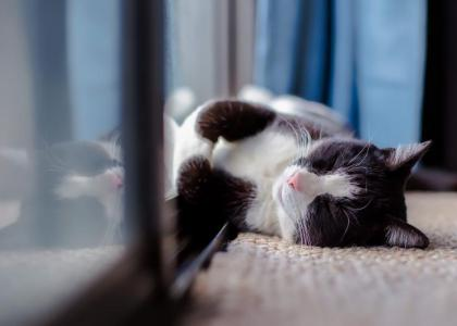 cat microchip plymouth vet
