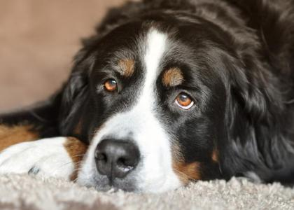 dog eye care at plymouth vet