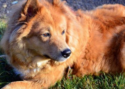 regenerative therapy for dogs