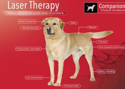 Plymouth IN Veterinary Laser Therapy for Cats and Dogs
