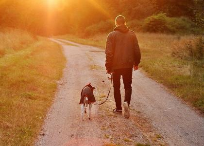dog walking with owner
